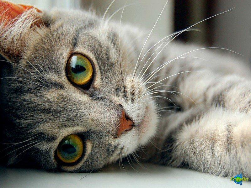 "Журнал Винкс и Поняши ""Euro Cats ""1 номер"